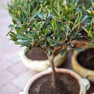 Immergrüne Pflanzen Winterhart Kübel : balkonpflanzen lexikon pflanzen auf dem balkon ~ Lizthompson.info Haus und Dekorationen
