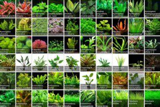 quarantine plants  adding  main display tank