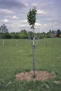 Protection Arbres Fruitiers : une bonne combinaison arbre animal ~ Premium-room.com Idées de Décoration