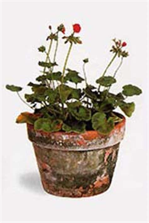 Terracotta Töpfe Streichen by Tont 246 Pfe Bemahlen Einfach Und Kreativ
