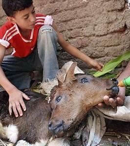 Animal En G : ces incroyables animaux deux t tes vont vous tonner ~ Melissatoandfro.com Idées de Décoration