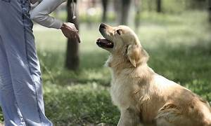 advanced diploma in dog training cpd certified course With advanced dog training