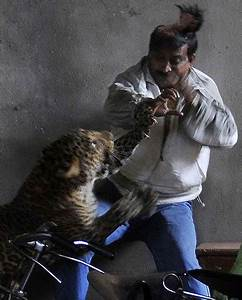Cornered Leopard Tries To Eat Man  Scalps Him