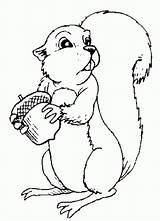 Coloring Squirrel sketch template
