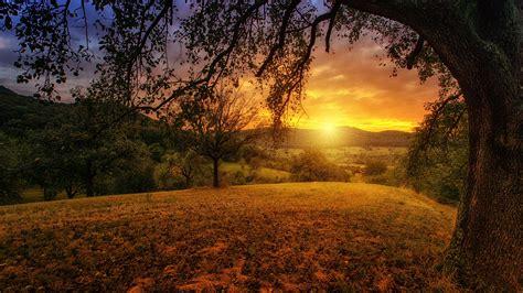 tree sun aesthetic landscape panorama 4k tree