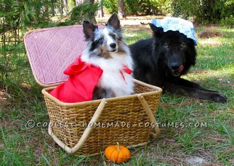 Cutest Little Red Riding Hood And The Big Bad Wolf Pet Dog