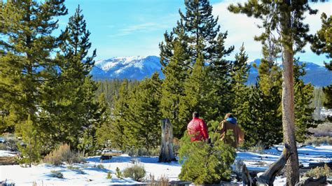 forest service sets christmas tree cutting dates in