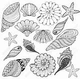 Coloring Pages Shell Zentangle Seashell Sea Seashells Drawing Line Conch Printable Silhouette Shells Gangster Getdrawings Adult Getcolorings Illustration Vector Sheets sketch template