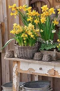 Blumenzwiebeln Pflanzen Frühjahr : blumenzwiebeln pflanzen blumenzwiebeln pflanzen blumenzwiebeln pflanzen ~ A.2002-acura-tl-radio.info Haus und Dekorationen
