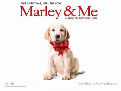 Dog Movies Marley 2008 Everyone Should Ever