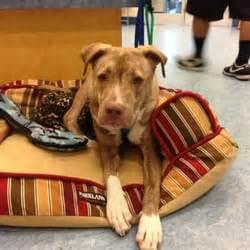 pet helpers adoption center charleston sc yelp