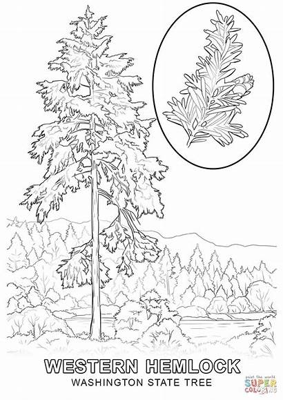 Coloring State Tree Washington Pages Printable Mexico