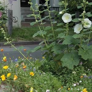Pflanzen Im Schatten : pflanzen berraschungspaket bl tenmeer im schatten waschb r ~ Orissabook.com Haus und Dekorationen