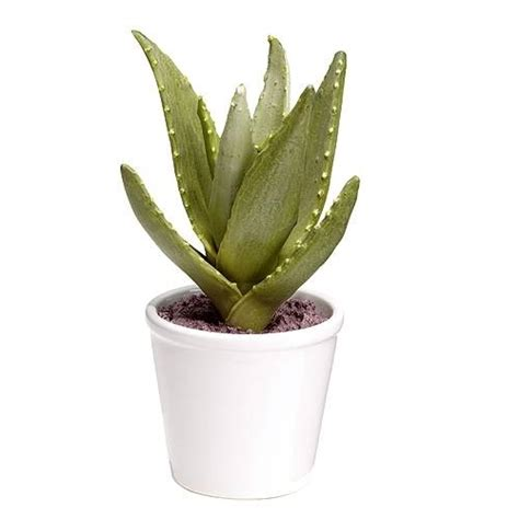 vaso piante vaso piante vasi