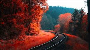 railway, between, red, blossom, autumn, forest, 4k, hd, nature