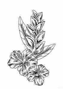 Tropical Flower Drawings - Cliparts.co