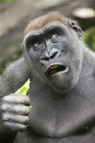list  animals  opposable thumbs