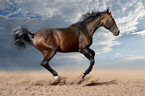 horse mean does horses noises names noise another spent meaning each around know they some