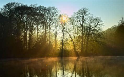 picture dawn landscape tree nature fog sunrise