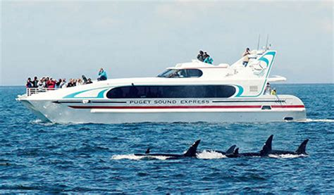 Whale Boat Tours Seattle seattle whale tours puget sound express