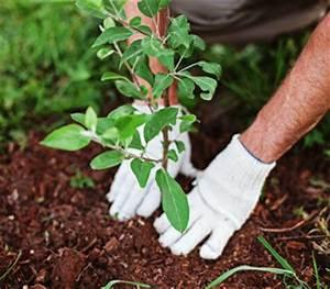 Quoi Planter En Automne : potager et jardin travaux d 39 automne plantation r colte ~ Melissatoandfro.com Idées de Décoration