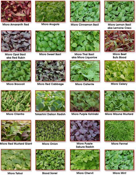 vegetable storage micro greens amazmerizing growin gardens