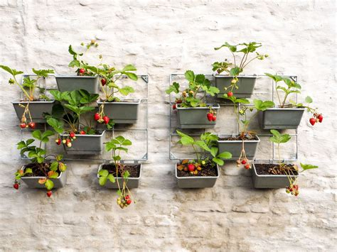 Bepflanzen Eines Hochbeetes by Erdbeeren Vertikal Anbauen Anleitung Tipps Zum