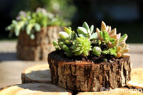 sea urchin  wood slice succulent planters pictures