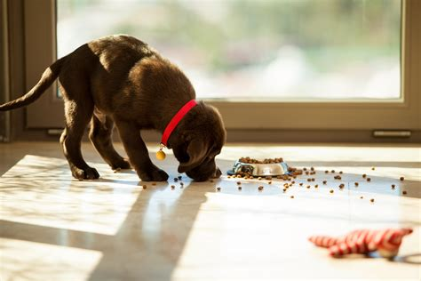Is Beneful Dog Food Killing Your Dog? | LawCall