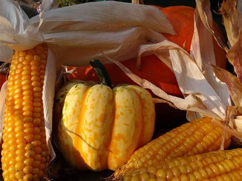 plentiful harvest | Food, Vegetables, Harvest