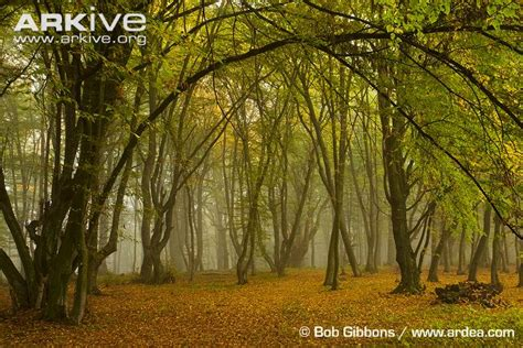 Forests Photo H408 Arkive