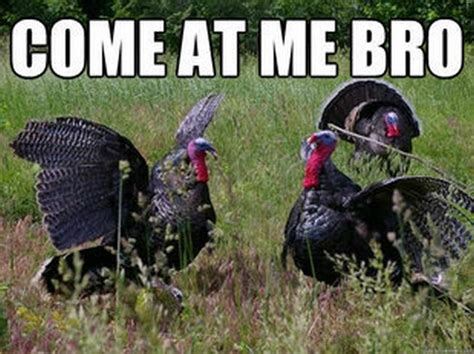 Turkey Meme - thanksgiving turkey memes