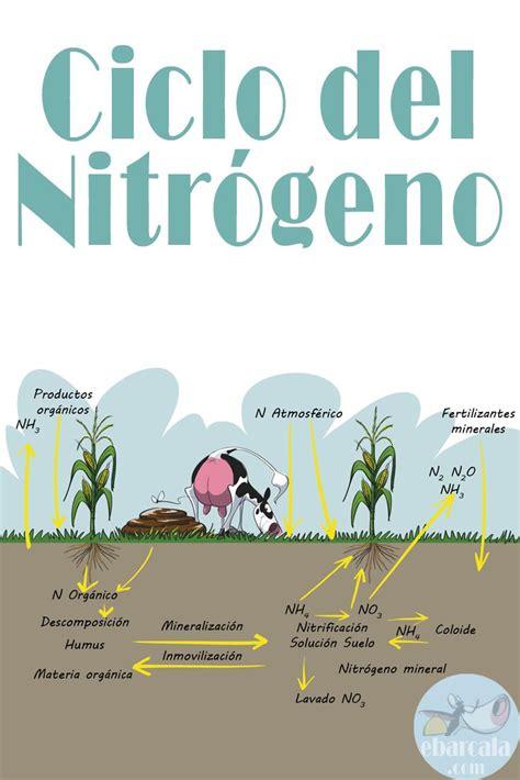 El Ciclo Del #nitrógeno Las Vacas Contribuyen Mucho Dale
