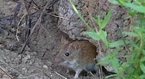 Mäuse Im Garten Vertreiben : ber m use im garten altes ~ Whattoseeinmadrid.com Haus und Dekorationen