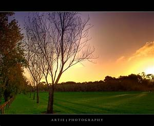 Hdr, A, Tree, In, The, Park, In, A, Sunset
