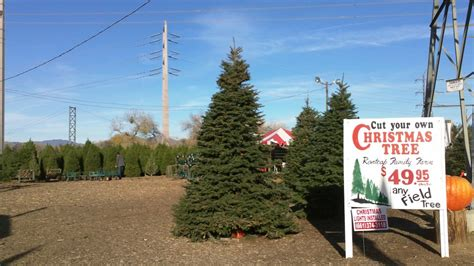 best 28 christmas tree farm los angeles cut your own