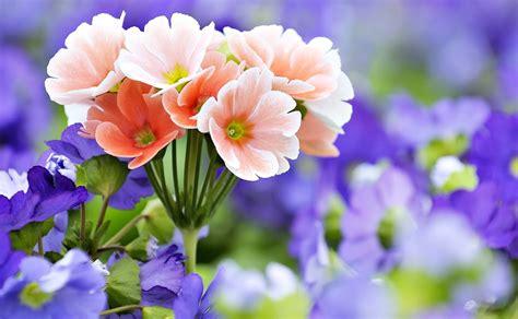 gambar wallpaper bunga bunga gudang wallpaper