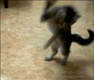 100 funny cat animated gifs | funny gifs,gif