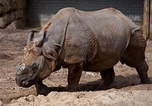 Let's Draw Endangered Species! : ): Rhino, Javan