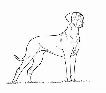 Dane Drawing Coloring Pages Wolf Winged Getdrawings