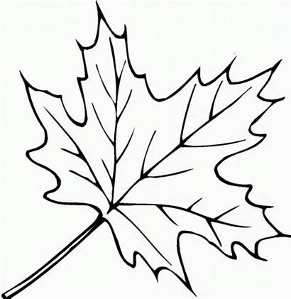 Leaf Coloring Template Pages Autumn Printable