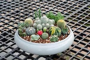 Pot A Cactus : cactus in pot stock photo colourbox ~ Farleysfitness.com Idées de Décoration