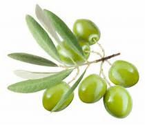 Ancient Greek Olives Olive oil pressautomatic  Ancient Greek Food Olives