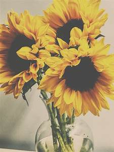 Soft photography. Vintage sunflowers photography. Pretty ...