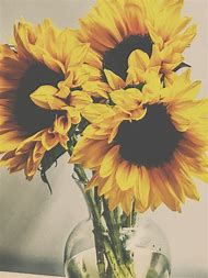 Sunflower Vintage Photography Flower