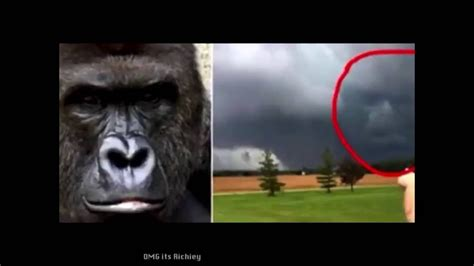 roses  blue violets  red harambe   dead youtube