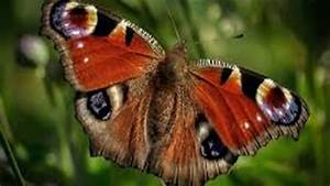Rare Species BUTTERFLIES in the world (2017) - YouTube