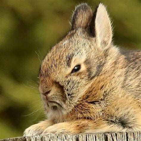 disapproving bunnies images  pinterest bunny bunnies  rabbits