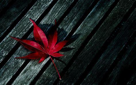 Marijuana Wallpapers ·①