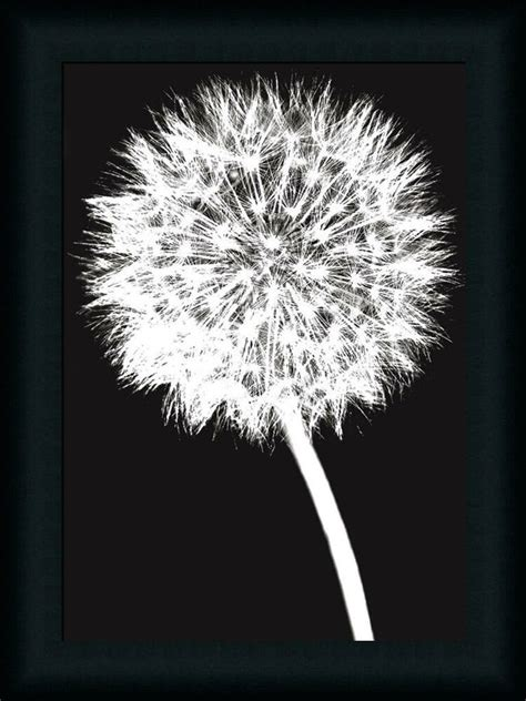 Dandelion By Jenny Black White Photography Framed Art